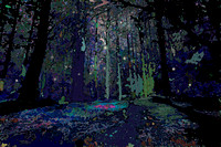 At Night, The Forest Comes Alive