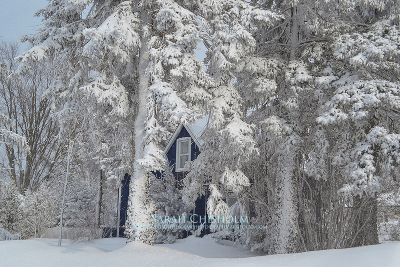 Frozen Front Yard