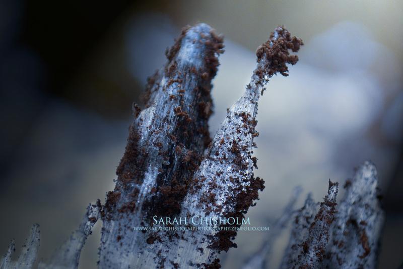 Forest Crystal - Blue Shard