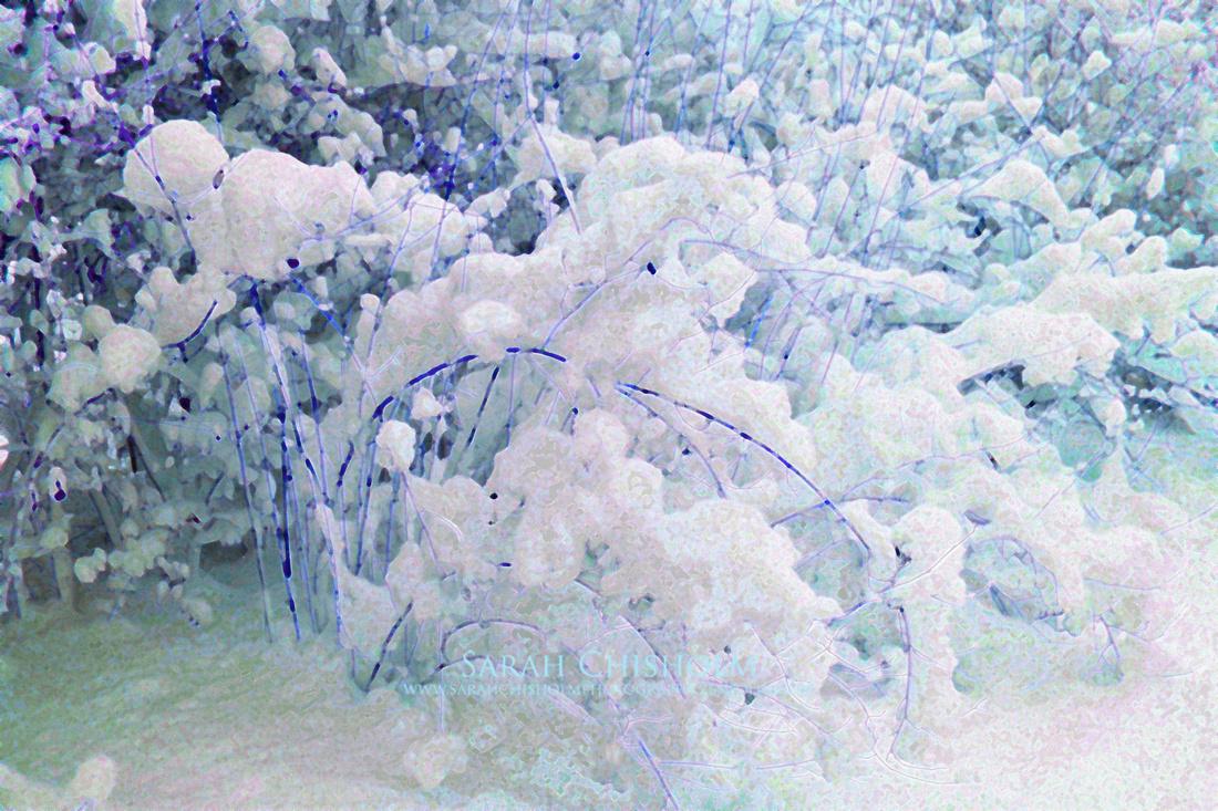 Snow-Laden Garden