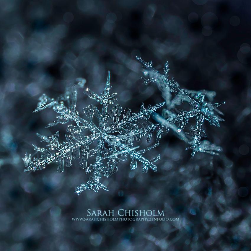 Snowflakes & Sparkles